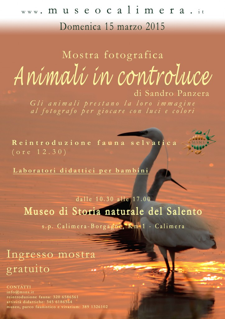 Animali in controluce